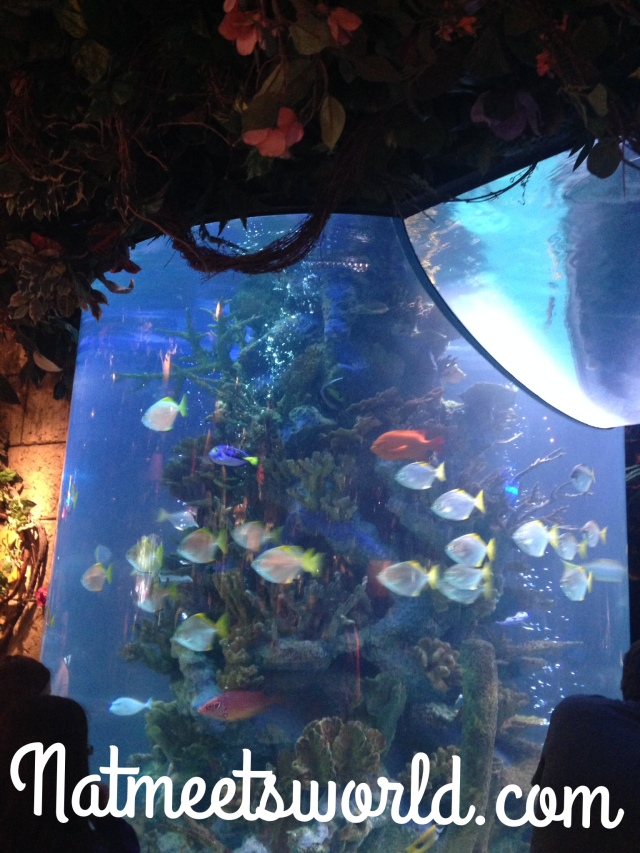 rainforest cafe tank