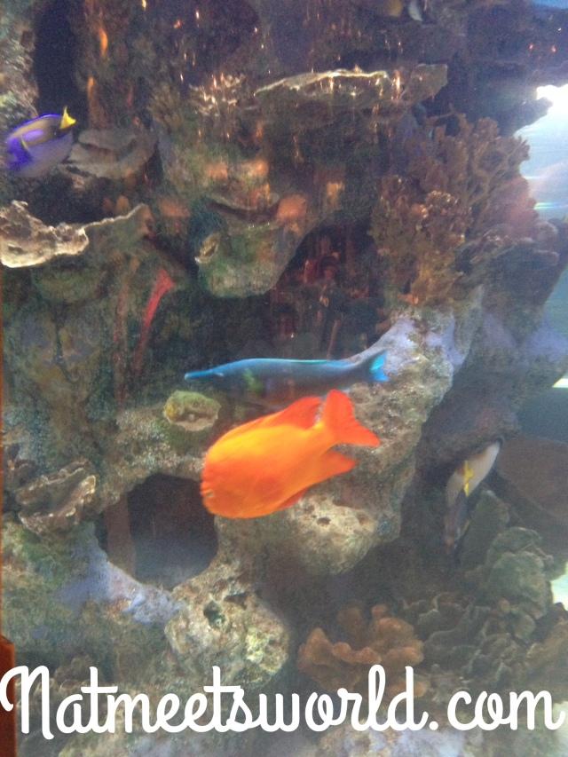 rainforest fish