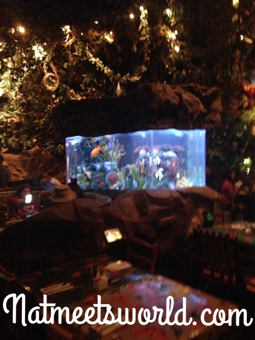 rainforest tank copy