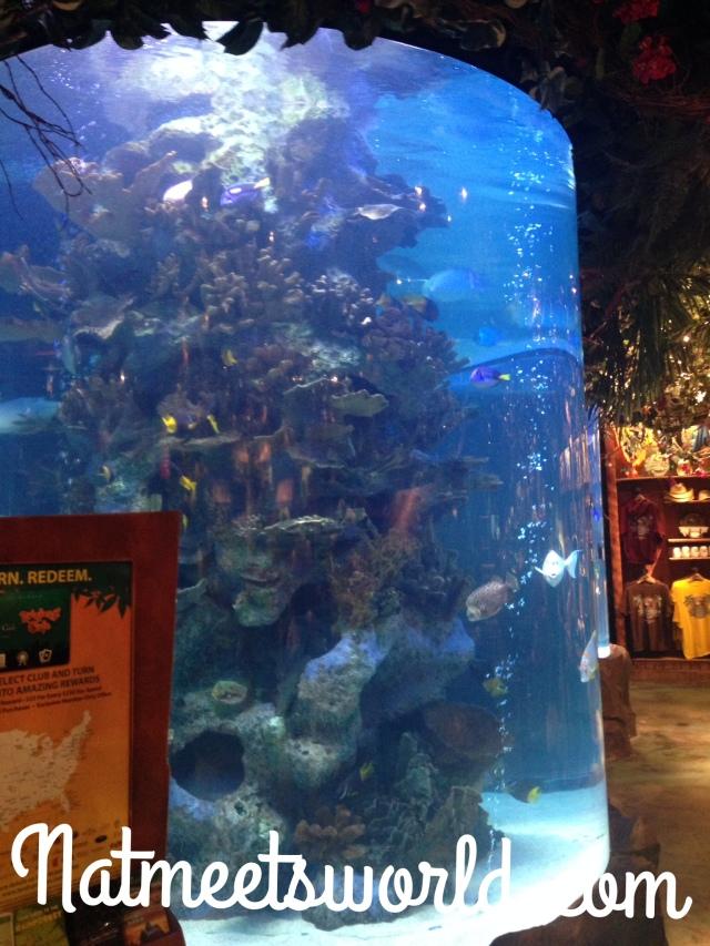 rainforest tank