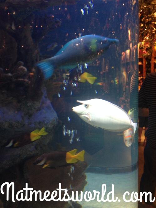 rainforest tropical fish