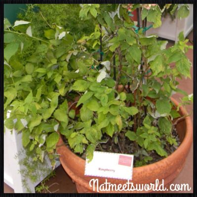 food and wine plants