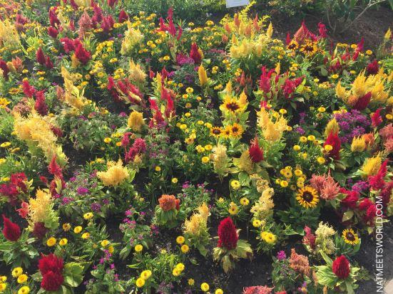Epcot Flower and Garden 4.jpg